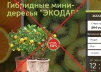 Отзывы о Экодар — гибридные мини деревья