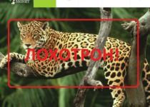 King-money — отзывы о лохотроне