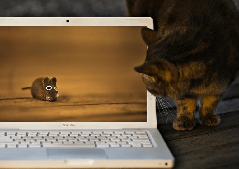 Где можно заработать в интернете без обмана?