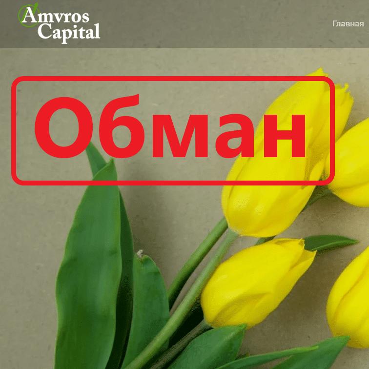 Amvros capital отзывы и обзор